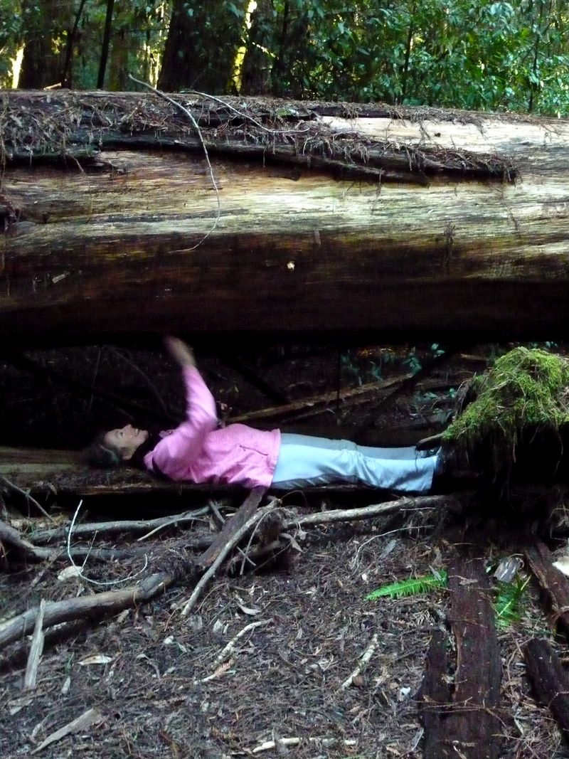 Old Growth, 4