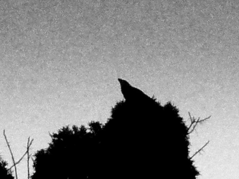Crow's Nest, 2