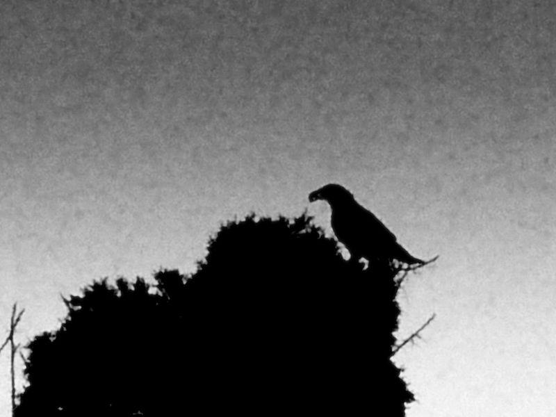 Crow's Nest, 1